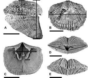 morphometric essay Annales zoologici fennici 47(1)  size and cycle: an essay on the structure of  photogrammetry: a useful tool for three-dimensional morphometric analysis of .