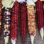 #Saporieprofumi dal mondo: il viaggio tra culture e ricette del Cluster Cereali e Tuberi http://t.co/dVpCgUbbW6 http://t.co/vWOhkd7lX4
