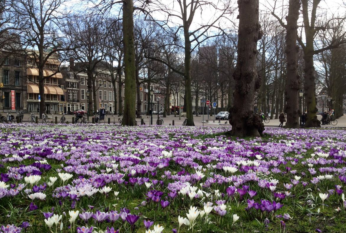 Op het Lange Voorhout is de lente begonnen. #lente #denhaag http://t.co/5QTl1ndZdU