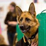Foto deixa jovem com cabeça de cachorro na Inglaterra http://t.co/pUXAm8RPo0 #G1 http://t.co/5iGFDJbPq8