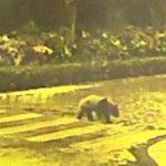 Exemplo: mesmo sem carros, panda só atravessa na faixa de pedestres. http://t.co/EAkUQGQxe0 http://t.co/OyTfIPUZIR