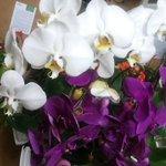 ЦАХИРМАА цэцэг тансаг шүү :-) http://t.co/lKKPjyIPj3