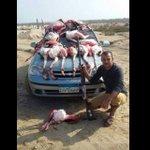 """@em_ess: #ريتويت #مصر للتعرف والقبض علي هذا المجرم اللي انتهك قوانين الحفاظ علي البيئة http://t.co/FXEnwAdBhI #Bey2ollak"