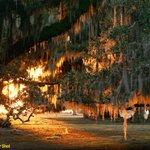 #TopShot: Live Oaks, Lit Up http://t.co/YuaOhX9QSn http://t.co/YDoOvS36qm #photography
