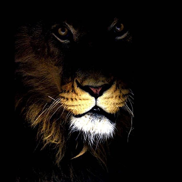 Işıkları Kapatın.. GELİYORUZ ! http://t.co/fguSwqTr2L