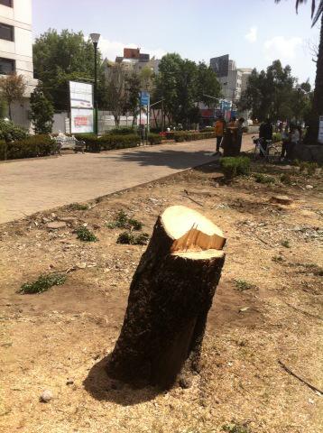 Taladera de árboles en Río Mixcoac... es una vergüenza los que están haciendo! @ManceraMiguelMX http://t.co/LzQTqXStdi