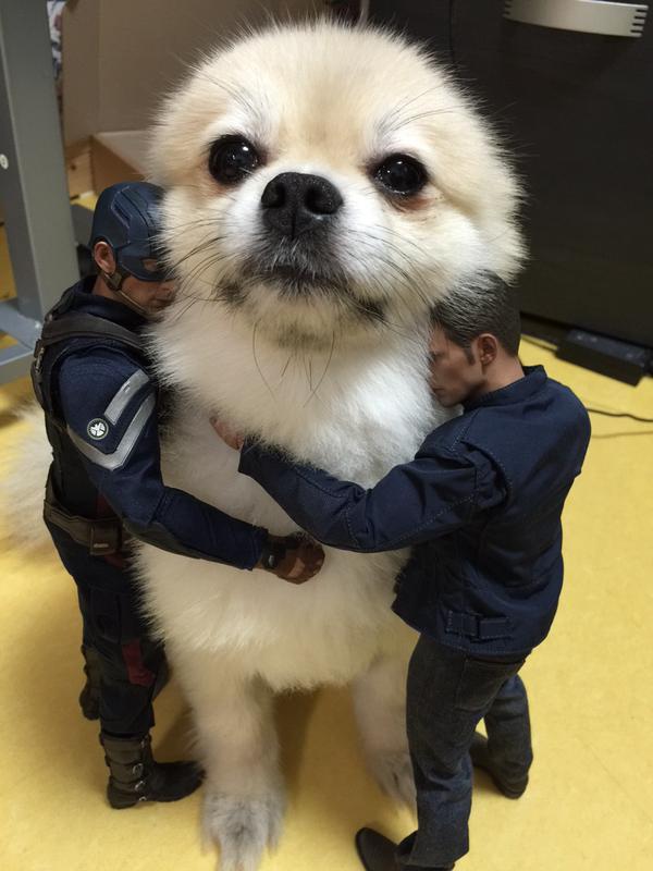 おっさんフィギュアに囲まれ解せぬ表情の犬wwwww http://t.co/sfMP1vn0PY http://t.co/Cjc3khIGyZ