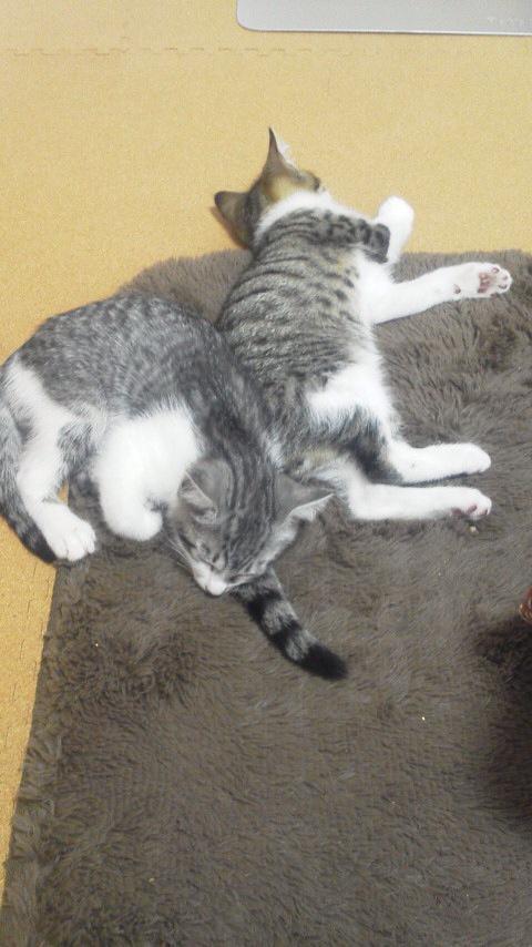 #サバトラ猫祭り http://t.co/Z6lC4fNS6R