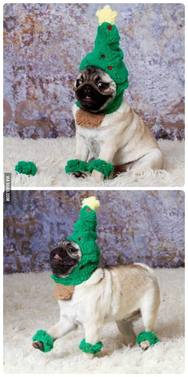 @9GAG: It's the most wonderful time of the year. #pug #christmas