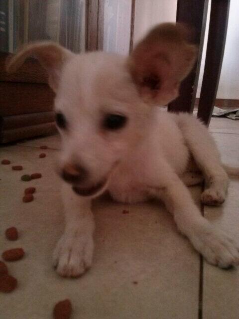 Yris Quijada (@yqdelvalle): SOL rescatada de la calle, tierna, sana, inteligente, la adoptas? 04146327914 @asoc_vpla @por_tusalud @ebmulti_media http://t.co/fxas3Hne3Q