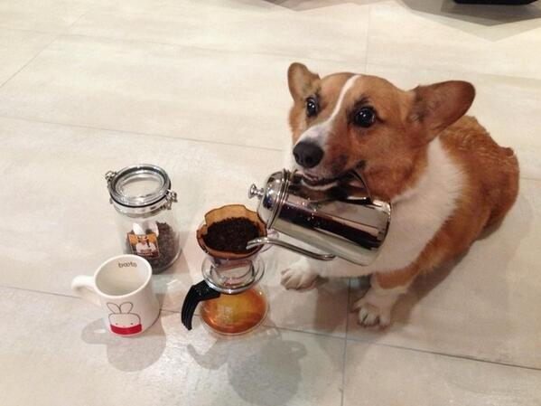 Matt Stopera (@mattstopera): The 40 most important corgis of 2013: http://t.co/d8OLfIY8KP http://t.co/tnJsqtkKAF