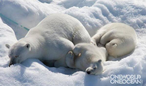 RT @CHANGINGSEAS: Kinda makes you want to bundle up with 'em! RT @1World1Ocean: This is what we like to call an Arctic cuddle puddle. http://t.co/GB4dwmUDQ2