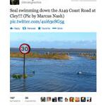 Picture of the day: a seal swimming down the A149 in Norfolk http://t.co/sBMCzyTjPg http://t.co/TLedbnMXqN