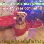 "RT @ClaireCage1: ""@CardiffDogs: Sadly at this time of year sometimes people need a reminder http://t.co/KCuWMGj5Mg""RT please"