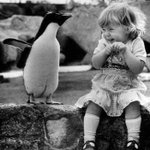 RT @HistoryInPics: A young girl meeting a penguin for the first time. http://t.co/mlHYmQWR5C