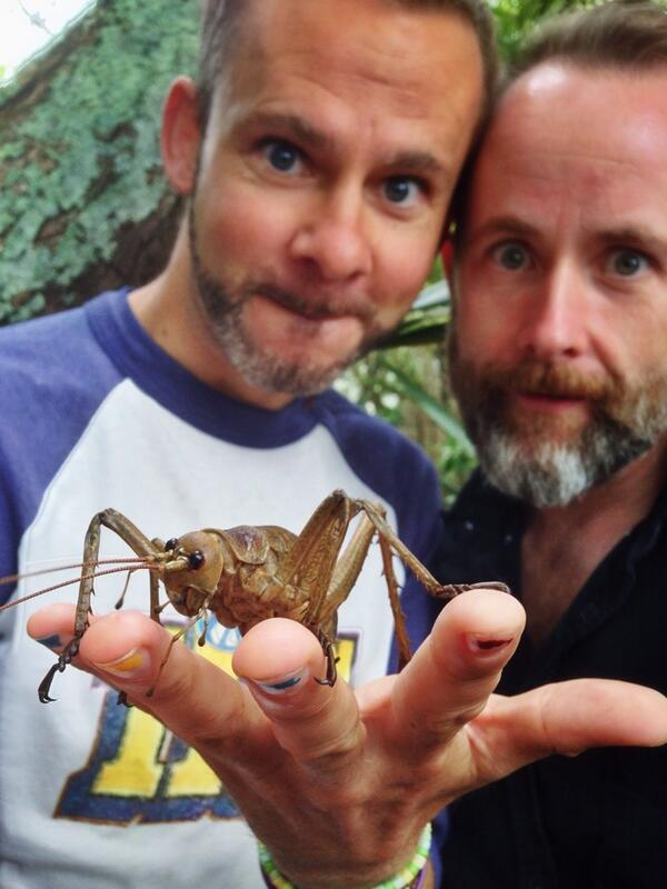 Three odd creatures find a connection in New Zealand! Wetapunga! #becurious http://t.co/YTI0UhI1s2