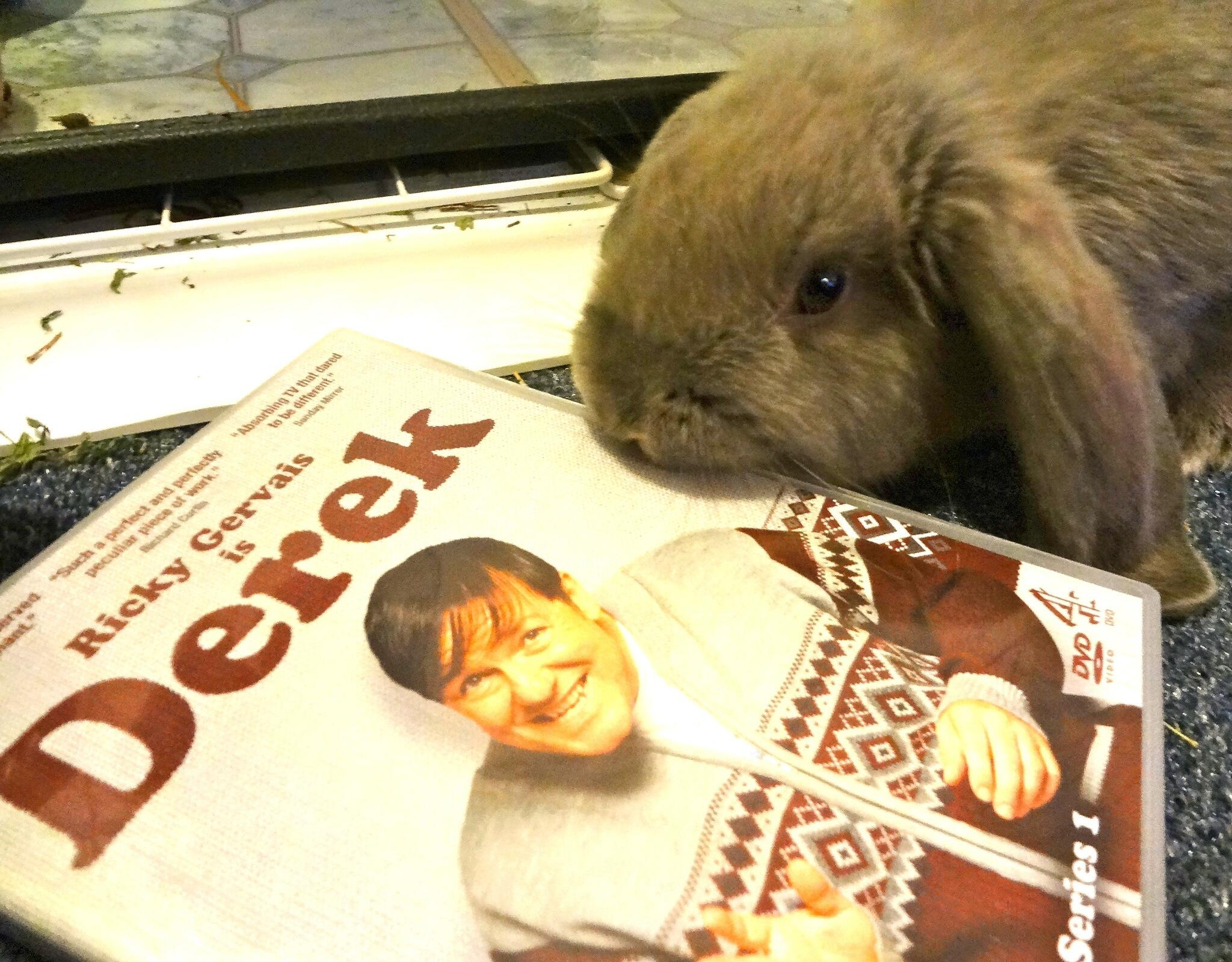 RT @Stitchn5saves15: @rickygervais So Hugo, what do you want to watch tonight? #Derek #kindnessismagic http://t.co/q6PWm3nlrl