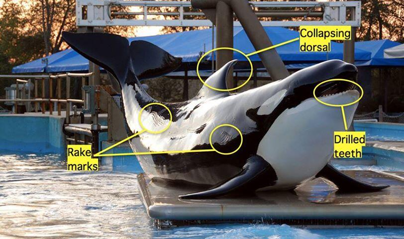 10 Signs Whales and Dolphins Do NOT Belong in Tanks  One