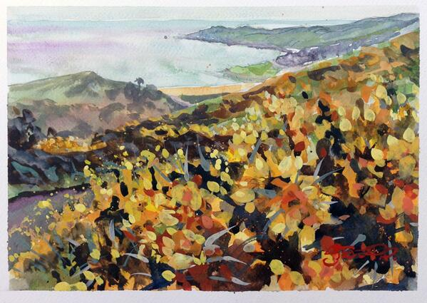 """""""Golden Gorse"""" my favourite views of our beautiful bit of coast, as you come down Challacombe Hill into #Woolacombe. http://t.co/LSH6XwRFGY"""