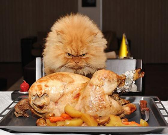 Take all the turkey. We insist. Can we get you a doggy, er, kitty bag…to go? http://t.co/ITsLU3c3gi