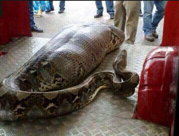 A python ate a man who was drunk and lying besides the liquor shop. News from Attapady. Kerala http://t.co/LVBCbRxKtA