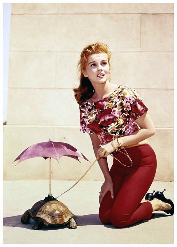 Ann-Margret with her pet tortoise http://t.co/hsWHi5WyMO