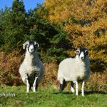 Keep warm by looking at some of my woolly photos!#holmfirthhour #ilovehd See my website http://t.co/goOZAQI0fe http://t.co/LbOe43DG5t