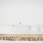RT @jefflphoto: A small flock of birds take flight over a snowy field in Windsor Twp. #pawx http://t.co/COrKKD5bm6