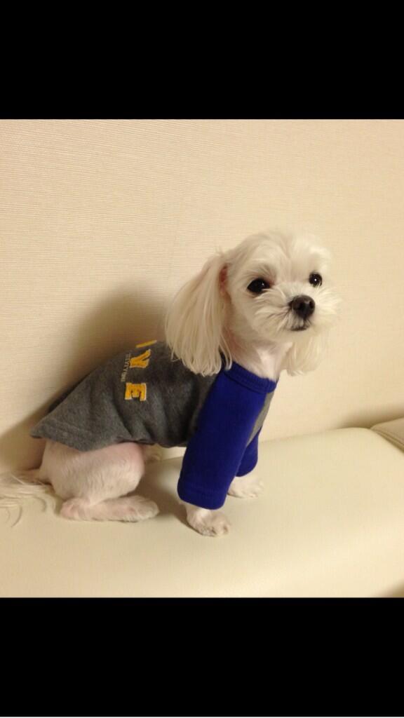 """사이즈도 3가지로 있으니 낼오셔요 """"@luccimam: 스티브앤요니가 만든 귀요미 강아지옷입은 우리 루팡이! 낼 오후 3시부터 두산바자회에서 판매되니 꼭오세요!수익금 전액은 유기견유기묘 보호단체에 기부됩니당! http://t.co/hNt1ypWkfI"""""""