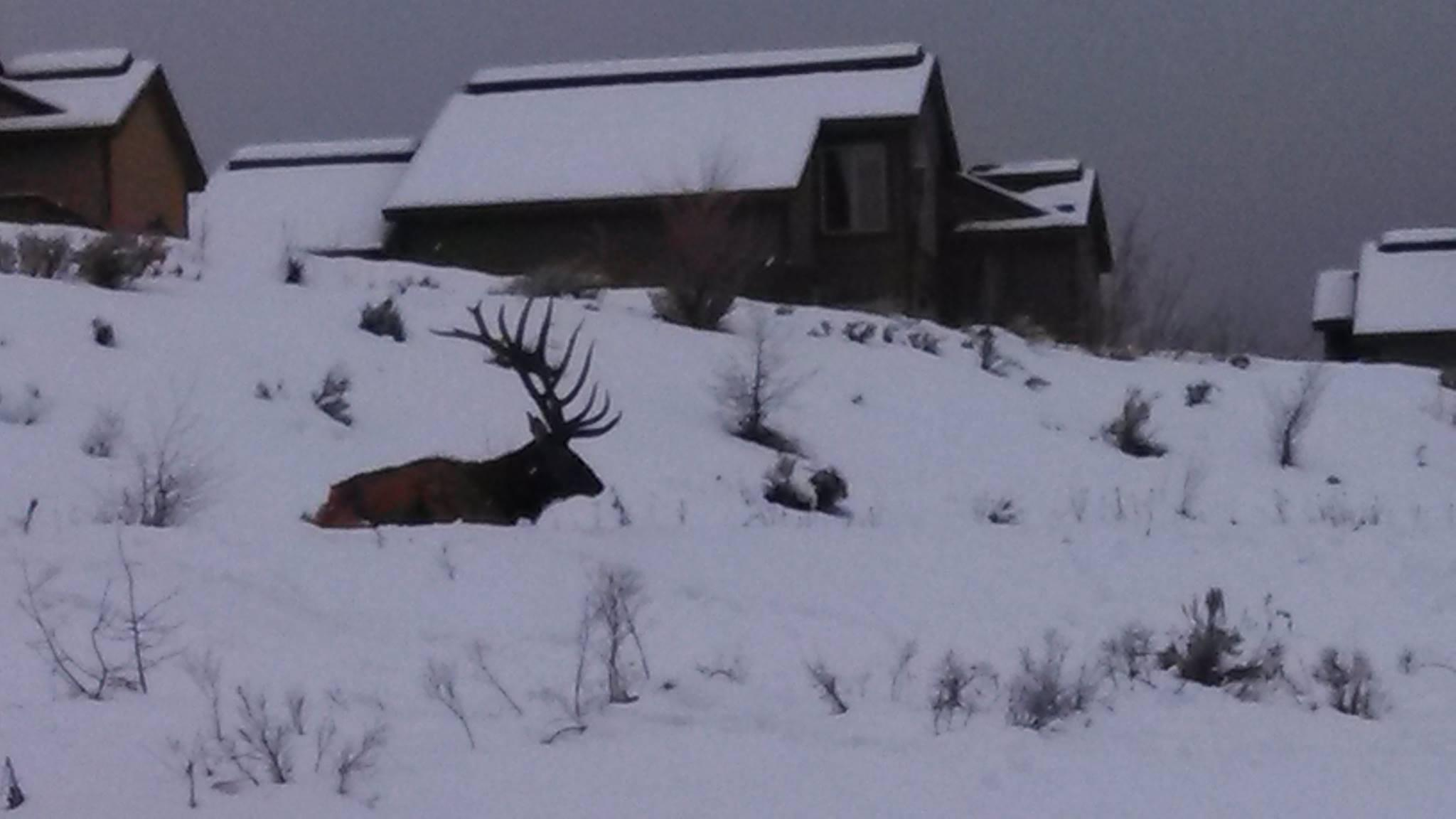 RT @RMEF: Good morning from Clark, Colorado! (PHOTO via @RMEF & Jamie) #elk #conservation #hunting http://t.co/48fiN6cohu