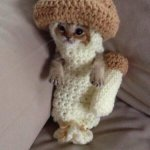 Hows abouts take 4 ☺️  In the meanwhile here is a picture of a cat in a mushroom costume - ash http://t.co/kOufoYx7vF