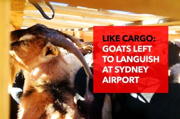 Tell Malaysia Airlines: Don't leave goats to suffer! http://t.co/SVxjVPdg8p TAKE ACTION: http://t.co/dkxXORMMVL via @AnimalsAus