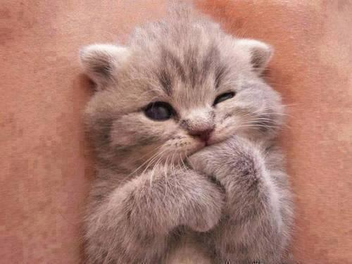 "RT @CatPornx: ""Mmm... tasty."" http://t.co/5cnshHilB2"