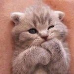 "RT @CatPornx: ""Mmm... tasty."" . ~ ` . http://t.co/iGylEV94lN"