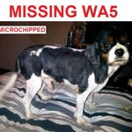 RT @WireFM: Please help try to find this poor little dog - lost in Great Sankey. Have you seen him? http://t.co/k5Bvw9ddlx