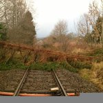 Tree on the line, south of Moulinearn level crossing http://t.co/lECGNhNgiy