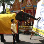 """@RichardBarrow: An elephant draws a picture of HM The King (Pic @sophon_Noc) http://t.co/SbsB2RFcuG #ทรงพระเจริญ""@bornfreeonekiss"