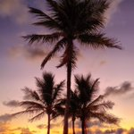 beach palms waiting. http://t.co/QegpqzcmjG