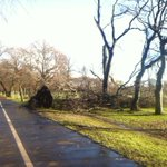 Big old tree down in Meadows, taken edge of new cycle path with it... @stvedinburgh http://t.co/mRzpqYBtbX
