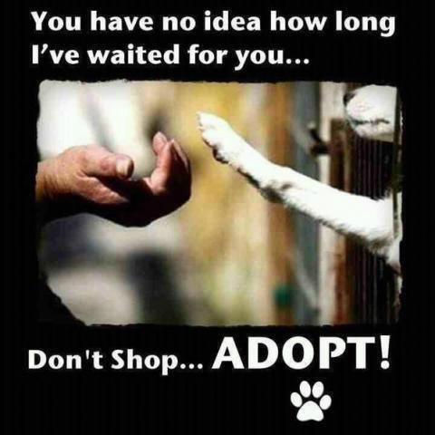 Use #adopt-a-pet search instead of a #petstore this #Christmas. Your #bestfriend is waiting! http://t.co/pGID47QypL http://t.co/NRkiGfBByt