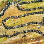 Whenever I hear people say they dont bother to vote, I think of that 1994 voting queue that made #Mandela President http://t.co/1RajC0K9Py