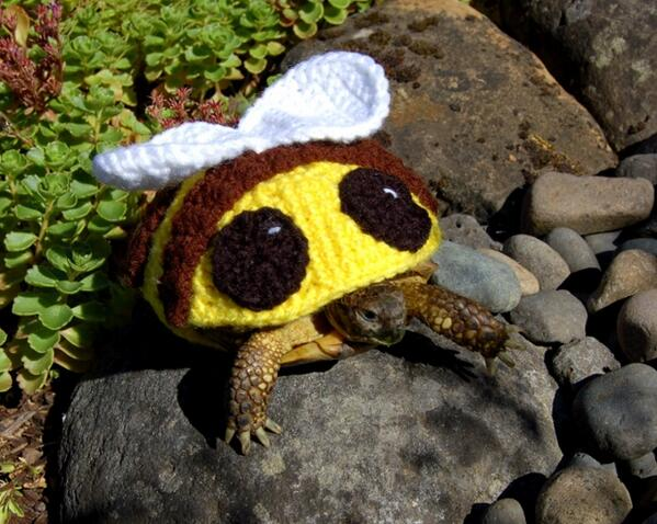 To bee or not to bee? http://t.co/hOOtJ6Ivb1