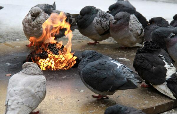 How Cold Is It? Pigeons gather near Eternal Flame in Chicago. #HowColdIsIt #midwest #Chicago #pigeons http://t.co/CrbYlMTWcL