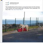 Awful. RT @helenamcgee: Anyone with information as to who killed this horse, please call the Gardaí. http://t.co/6dYhnDlvzu