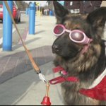 Molly is sporting pink shades, a Santa suit and a bell to help the Salvation Army in Wisconsin! #9newsmornings @9NEWS http://t.co/L1hnn9LMkm