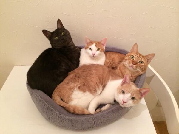 焼き菓子の詰め合わせとかってありますが....こりゃ猫の詰め合わせですな(`・ω・´)!笑 http://t.co/aJitGYMnT9