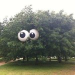 "Gaaf!""@Baukje78: Iets voor #utrecht?""@bomengidsnl:RT@PermalocEdging:Amazing how(...)beach balls can give tree life! http://t.co/YlASe2sU4Q"""""