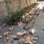 "RT @rraein: ""@iTweetFacts: Japans ""Cat Island"", Tashirojima, has more feral cats than people. http://t.co/UpUHYLjUul"" cats and more cats!!!"