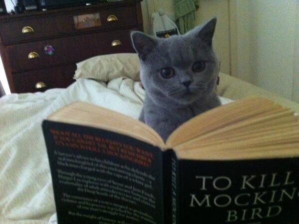 #DisappointedKitty RT @sturdyAlex There is absolutely no information in here about how to kill a mocking bird. http://t.co/4sXcGQ3XNr