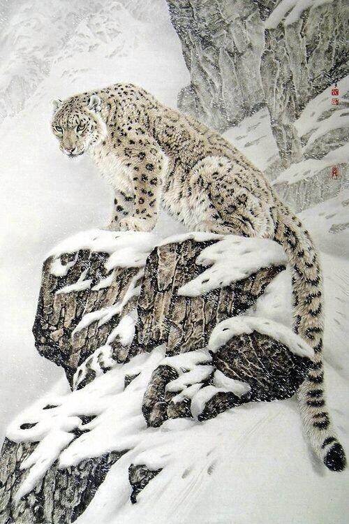 Snow Leopard in China. http://t.co/lWcISYfs9G